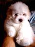 Lulu:Toby girl