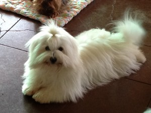 past puppy 4