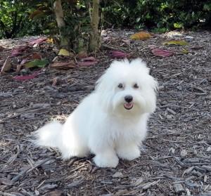 past puppy